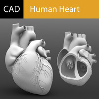 Solidworks Human Heart